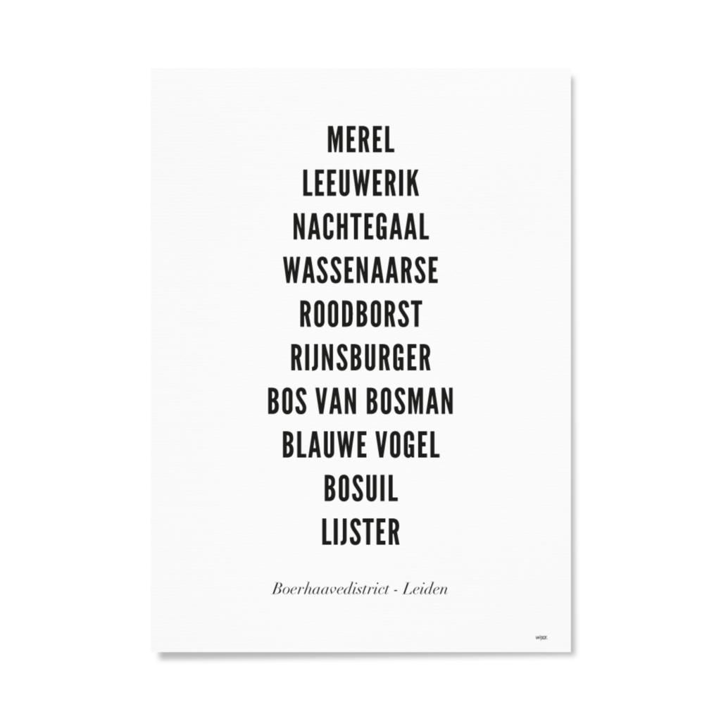 LeidenBoerhaavedistrictTYPOGRAFIEPapier